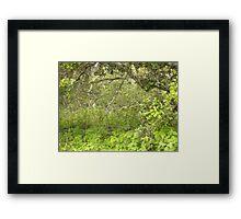 Old Oak Undergrowth Framed Print