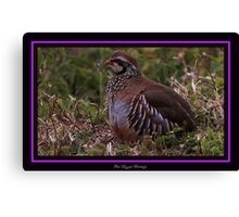 The Red Legged Partridge Canvas Print