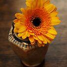 Orange-brown simplicity by steppeland