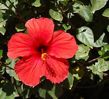 Flower from Lanzarote by Sandra Oddy