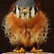 Birds In The Spotlight - Oh, I'm sò cute, you can't help loving me!