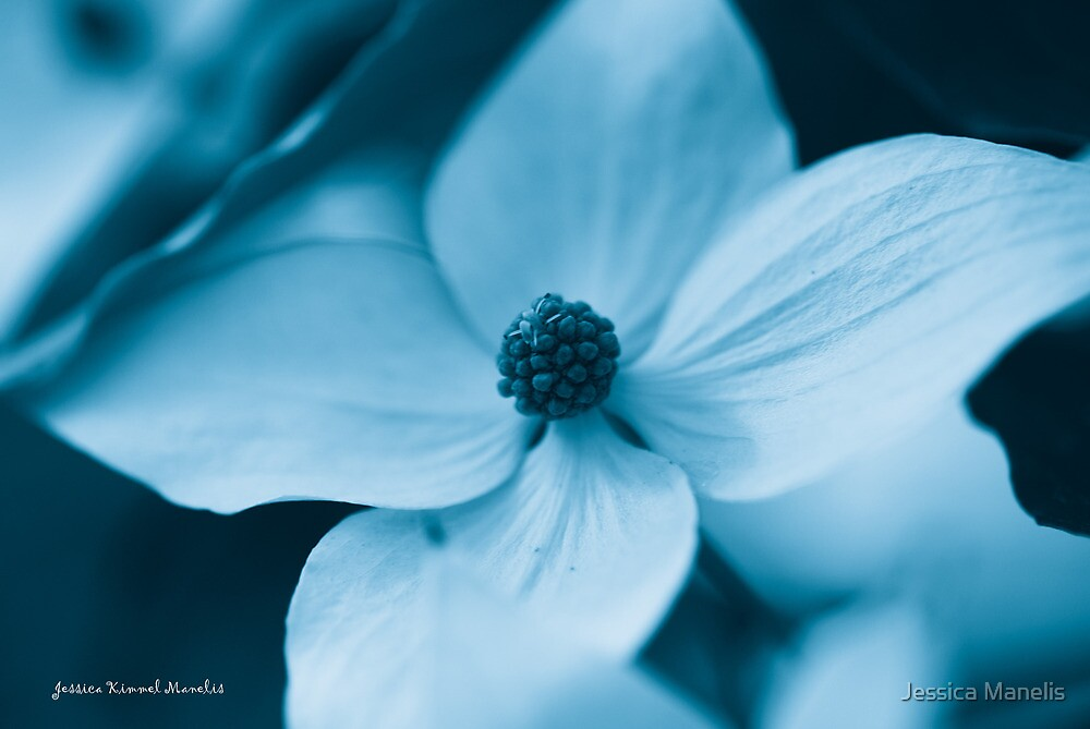 Out Of The Blue by Jessica Manelis