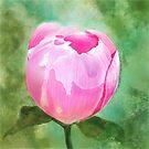 Pink Peony Bud by Joan A Hamilton