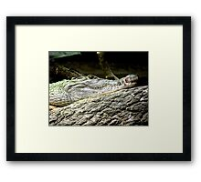 Philippine Crocodile (Crocodylus mindorensis) Framed Print