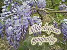 Sympathy Card Wisteria Vine by MotherNature