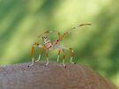 Sebastian the Shrimpbug by elasita