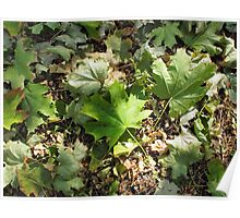 Top view of the green fallen maple leaves closeup Poster