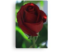 ~ Ruby Rose ~ Canvas Print