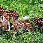 Baby Boars by vette