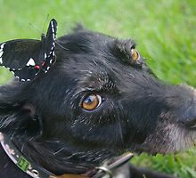 My dog with a butterfly on her head by Linda Fury
