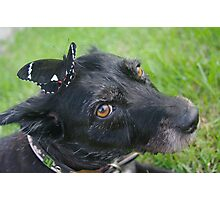 My dog with a butterfly on her head Photographic Print