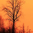 Red Tree Orange Sky by Steve Walser