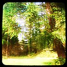 My Backyard TTV by FloraDiabla