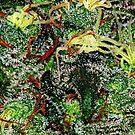 Trichome Macro by FloraDiabla