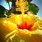Earth laughs in flowers. ~ Ralph Waldo Emerson by angelmarie