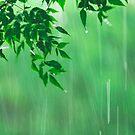 green rain by lensbaby