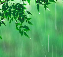 green rain by lensbaby