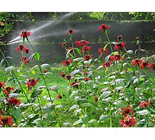 Flowers taking a drink  Photographic Print