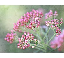 Rice flower tapestry Photographic Print