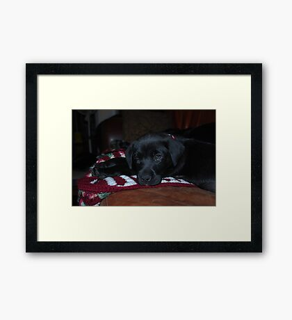 Our New Puppy Framed Print