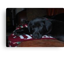 Our New Puppy Canvas Print