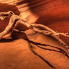Antelope Driftwood (Antelope Canyon, Page, Arizona) by Brendon Perkins