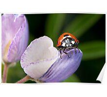 Beach Bug Poster