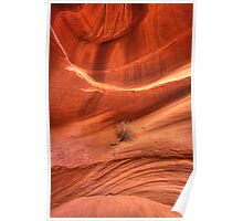 Red Rock Sagebrush (Antelope Canyon, Arizona) Poster