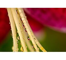 Happy Droplets Photographic Print