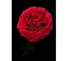 Deep red Photographic Print