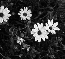 Good Morning Fab Four - Central California Garden by Nyal Bennett