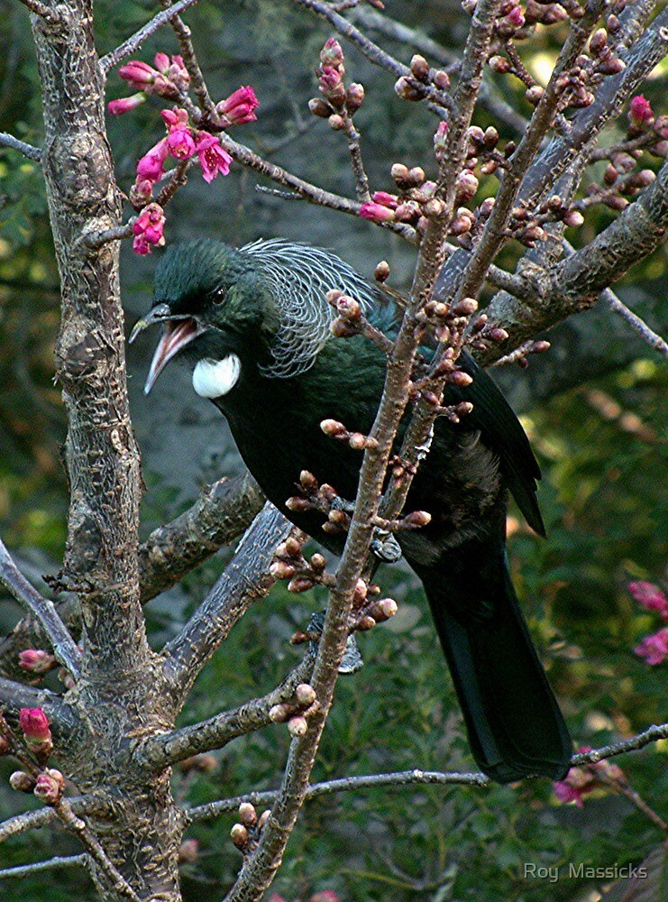 Tui........clear off, this is my patch ! by Roy  Massicks