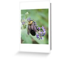 Bee-utiful Bee! Greeting Card