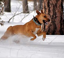 snow was made for dogs by gene mcfarland