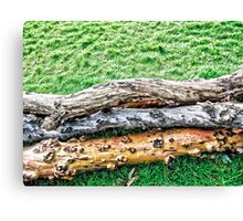 Contrast in Nature Canvas Print