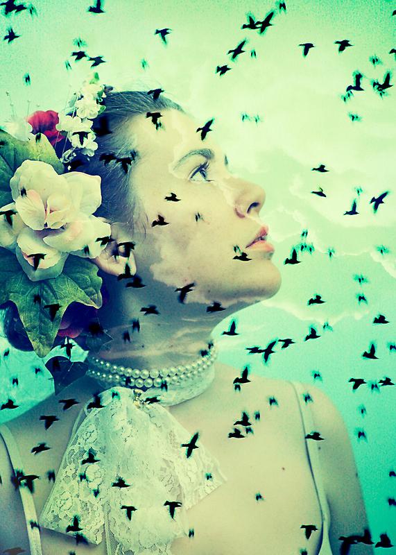 Flight.... by Carol Knudsen