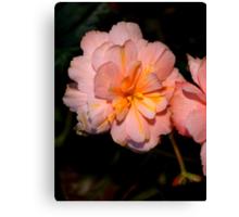 Pink Begonia Flower  Canvas Print