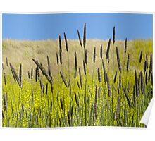 Wild Grass Hills Poster