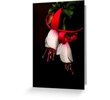 Red & White Fuchsia  Greeting Card