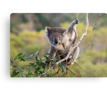 Hanging Around ... Metal Print