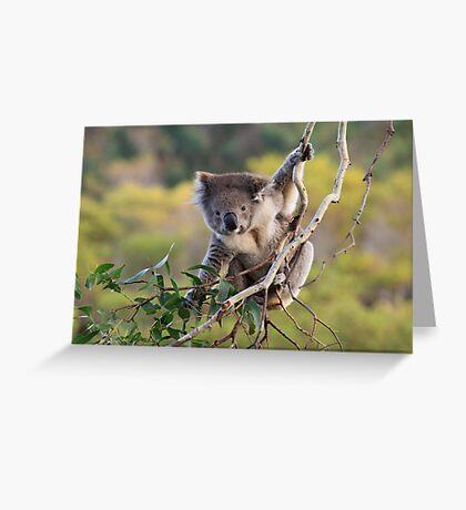 Hanging Around ... Greeting Card