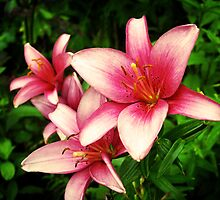 Moneymaker Lily by Rewards4life