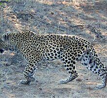 SO CLOSE ! The Kruger National Park, South Africa by Magriet Meintjes