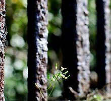 Flower by Railing - Liverpool, England by littleinca