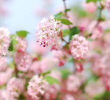 A Spring Blossom by clare barton