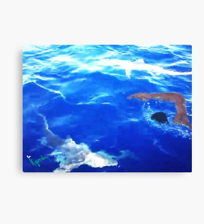 ? SWIMMING WITH THE SHARKS ? Canvas Print