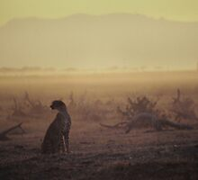 Silhouette of a Cheetah at Amboseli by Richard Shakenovsky