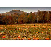 A Fall Scene - PUMPKIN PATCH ^ Photographic Print