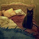 Cat by Louise Fahy