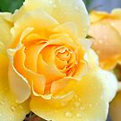 Raindrops on Yellow Rose by rosie320d